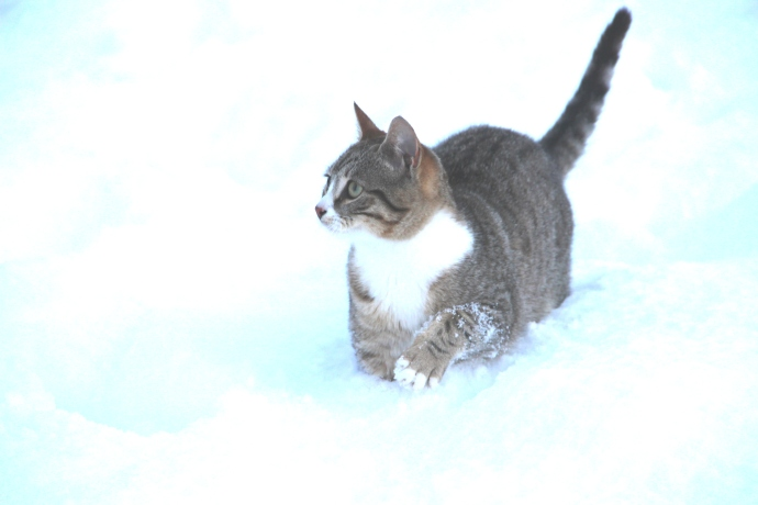 The cat didn't walk through the snow but leapt like a gazelle.  Very elegant.