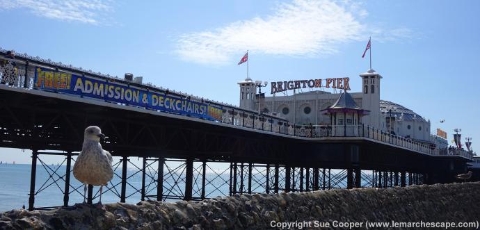 Brighton Pier & Seagull