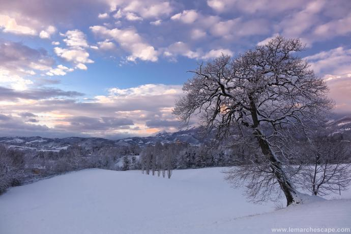 Snow LR (2 of 5)