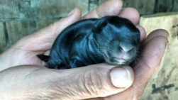 Cutie baby rabbit. He does have ears, I promise!