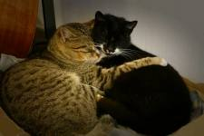 And this is Batfink with his girlfriend, Calzini. She was Storm's sister. Batfink is the tigery looking one on the left.