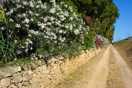 Puglia (49 of 128)